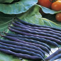 Dwarf French Bean Purple Queen